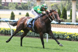 Snoopy, above, has been installed the favourite for the Lough Neagh Stakes at Doomben. Photo by Ultimate Racing Photos.