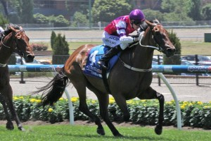 One of only two fit horses running in the Kevin Hayes Stakes, Royal Snitzel is the odds-on favourite in the betting.
