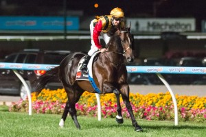 Tony Gollan is confident of success for Spirit Of Boom in the 2014 Doomben 10,000