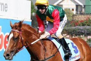Amarela will be aiming to replicate the feats of 2014 Australasian Oaks winner May's Dream (pictured). Photo: Race Horse Photos Australia