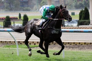 Signoff is a leading chance for success in the 2014 David Jones Cup. Photo: Race Horse Photos Australia