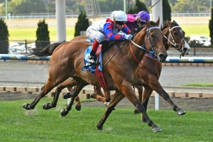 Ability will be ridden by Dwayne Dunn in Sunday's Group 3 Bletchingly Stakes at Ladbrokes Park. Photo: Ultimate Racing Photos