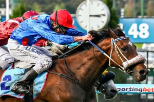 Wish Come True currently ranks as clear market mover in 2014 Geelong Cup betting markets. Photo: Race Horse Photos Australia