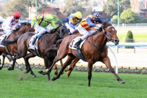 Under The Louvre is in career-best form leading into the 2015 Goodwood Handicap. Photo: Race Horse Photos Australia