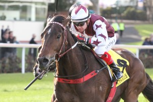 Ken's Dream, above, is one of three Darren Weir trained sprinters nominated for the Australia Stakes at The Valley. Photo by Ultimate Racing Photos.