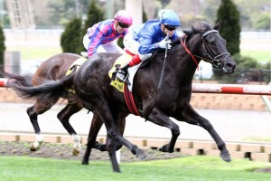 Fragonard worked well to the line to win Race 2 at The Valley. Photo: Ultimate Racing Photos