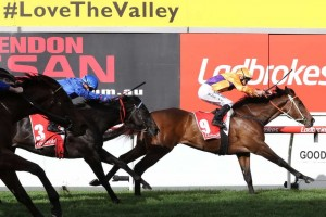 Overshare led from start to finish in this Listed McKenzie Stakes at The Valley this afternoon. Photo: Ultimate Racing Photos