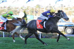 Chautauqua remains a clear favourite in 2016 Manikato Stakes betting markets. Photo: Ultimate Racing Photos