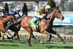 Stay With Me has been confirmed in 2015 Thousand Guineas second acceptances. Photo: Ultimate Racing Photos