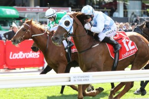 Magnapal, above in light blue and white colours, is at long odds for the Naturalism Stakes at Caulfield. Photo by Ultimate Racing Photos.