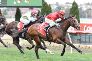 Russian Revolution is being set for the Oakleigh Plate at Caulfield first up. Photo by Ultimate Racing Photos.