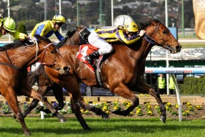 Trainer Jason Warren has revealed the 2015 The Galaxy may figure as the first point of call for Bel Sprinter upon his racing return. Photo: Race Horse Photos Australia