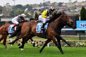 Precedence has been confirmed in the 2015 Chelmsford Stakes final field. Photo: Race Horse Photos Australia