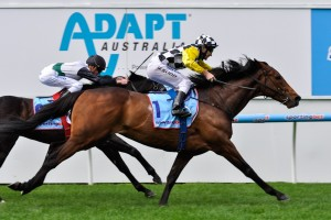 Precedence will be set for the 2015 Melbourne Cup upon resuming in spring. Photo: Race Horse Photos Australia