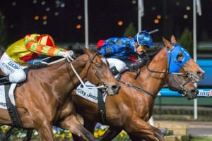 Buffering (centre, blue silks) and Lankan Rupee (outside) will battle it out for the third time in the Manikato Stakes.
