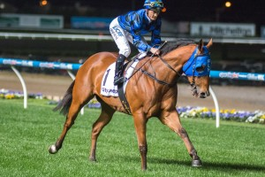 Buffering has sustained a fetlock strain an may not contest the 2015 BTC Cup. Photo: Race Horse Photos Australia