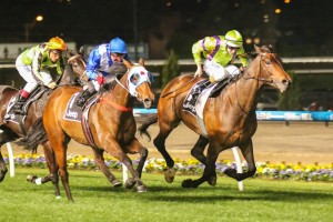 Dear Demi (outside) is looking to win the Caulfield Cup this Saturday for the girls.