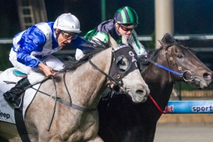 Shamus Award is chasing his first career victory in the 2013 Cox Plate at Moonee Valley on Saturday.