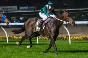 Samaready will have the opportunity to record her third win at Group 1 level in the Black Caviar Lightning Stakes at Flemington on Saturday.