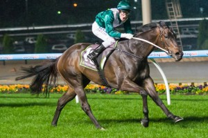 Trainer Mick Price has revealed Samaready is likely to contest lesser races through the 2014 Spring Racing Carnival