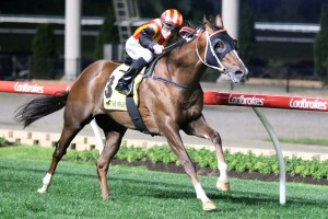 Showtime, above, is likely to run in the P.B. Lawrence Stakes at Caulfield. Photo by Ultimate Racing Photos.