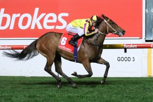 Super Too, above, is among the nominations for the Caulfield Sprint at Caulfield. Photo by Ultimate Racing Photos.