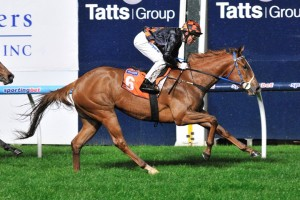 Miss Stellabelle is chasing his first win in over a year when she contests the Bow Mistress Trophy at Hobart on Sunday.