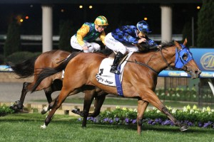 Buffering claimed his fifth Group 1 victory with a typically tough win in the 2015 Moir Stakes. Photo by: Ultimate Racing Photos