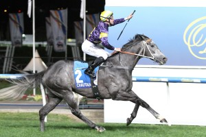 Tommy Berry scored his second Group 1 victory on Chautauqua in the Manikato Stakes. Photo by: Ultimate Racing Photos
