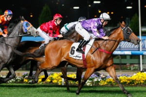 Tommy Berry is confident in partnering Pheidon to success in the 2014 Kingston Town Classic this weekend. Photo: Sarah Ebbett