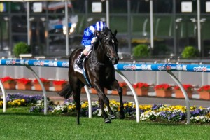 Tawteen will be on trial for the Dubai World Cup night in the Lightning Stakes.