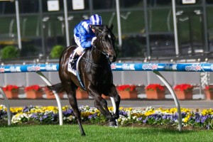 Tawteen will return to Moonee Valley on Friday in a bid to score her third win at the track.
