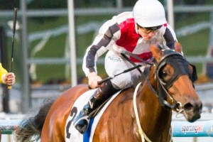 Gypsy Diamond is contesting favouritism for the 2014 Angst Stakes.
