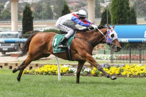 Lumosty has taken out the 2014 Moonee Valley Fillies Classic. Photo:  Sarah Ebbett