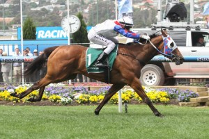 Lumosty may not make the final field of the 2015 Stradbroke Handicap. Photo: Race Horse Photos Australia