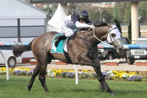 Moonovermanhattan has competed an ideal lead-in to the 2014 Victoria Derby. Photo: Sarah Ebbett