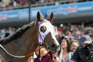 Prince Of Penzance scoffs at a punter who didn't have faith in him prior to his 2014 Moonee Valley Cup victory. Image: Sarah Ebbett.