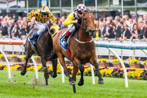 Precedence remains a narrow favourite in betting markets for the Group 2 Zipping Classic that will be run at Caulfield on Saturday.