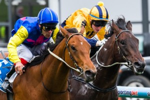 Cornrow (inside) will not contest the 2014 Golden Rose Stakes