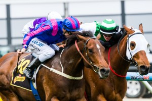 Trainer Colin Scott is hopeful that Speediness can turn-the-tables on Toydini in the Group 1 Emirates Stakes at Flemington on Saturday.