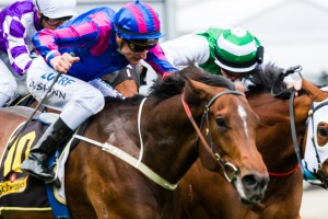 Toydini will leave from barrier 8 in the 2014 Epsom Handicap
