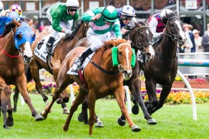 Vibrant Rouge has been confirmed in the 2015 Bow Mistress Trophy final field. Photo: Race Horse Photos Australia