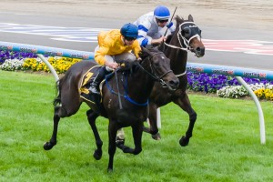 Silent Achiever has been confirmed in 2014 Cox Plate first acceptances