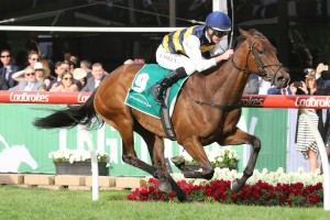 Aloisia, above, will start the short priced favourite for the VRC Oaks at Flemington. Photo by Ultimate Racing Photos.