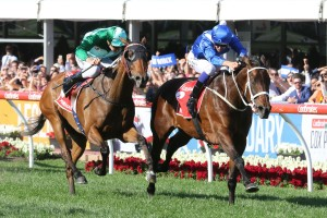 Winx, above in blue colours, has to fight hard to beat Humidor, green colours, in the 2017 Ladbrokes Cox Plate at The Valley.