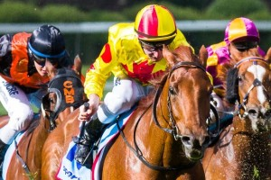 Coronation Shallan is primed for success in the 2015 Sandown Stakes. Photo: Race Horse Photos Australia