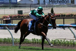 Headwater will return to racing in Saturday's Kensington Stakes at Flemington. Photo: Adrienne Bicknell
