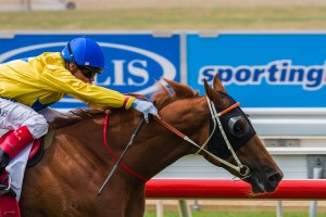 Gold Force is the undoubted mover in betting markets for the 2014 Skyline Stakes