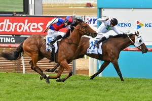 Steel Prince, above in blue and red colours, finished third in The Bart Cummings at Flemington. Photo by Ultimate Racing Photos.