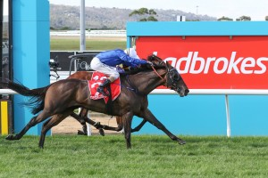 Tally beat Vengeur Masque to the line to win the Ladbrokes Mornington Cup. Photo: Ultimate Racing Photos